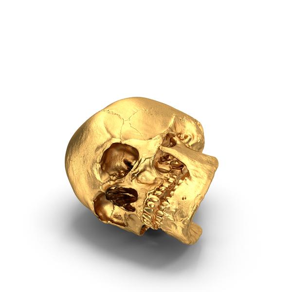 Gold Skull Object
