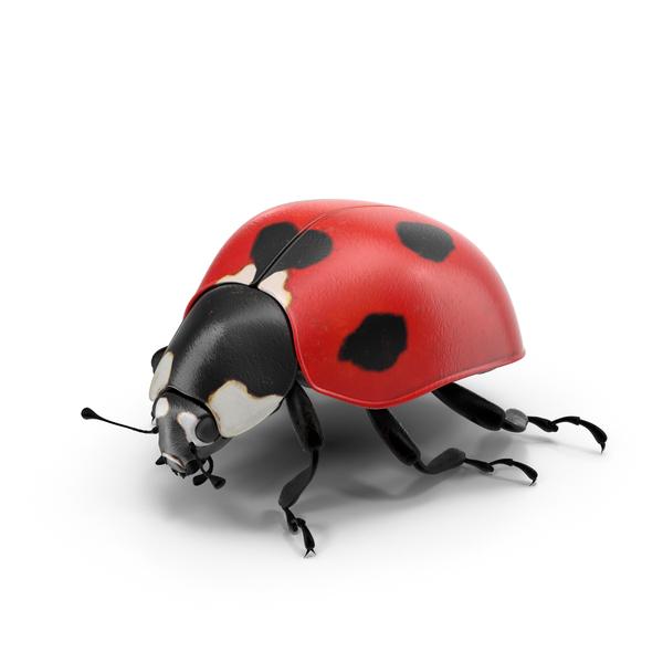 Ladybug Object