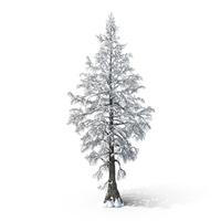 Bare Snow Tree Object