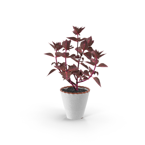 Potted Plant Object