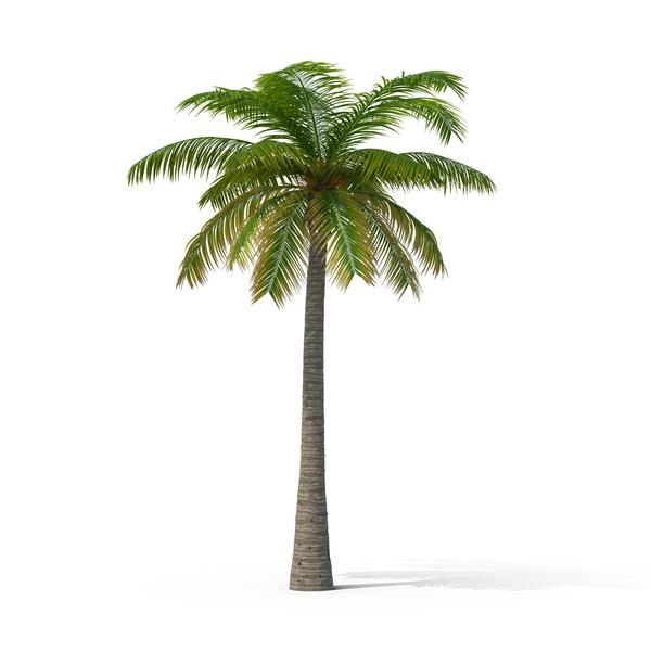 Palm Tree Object