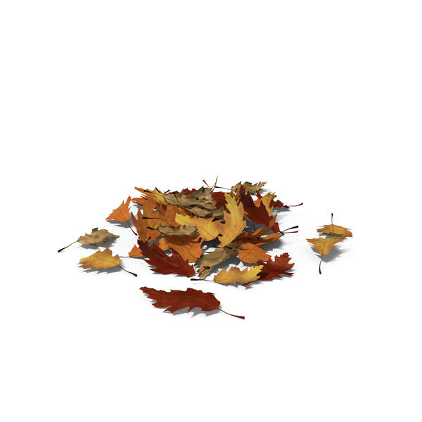 Small Pile of Oak Leaves Object