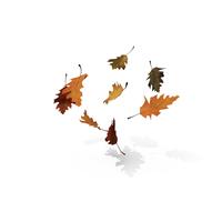 Fall Oak Leaves Object