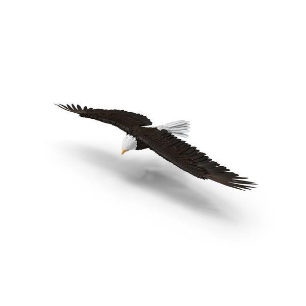 Bald Eagle Turning Object