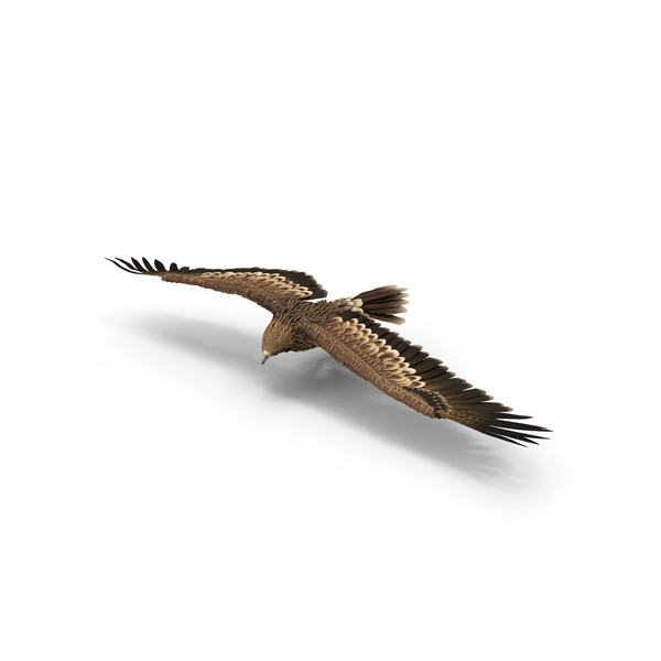 Imperial Eagle Turning Object