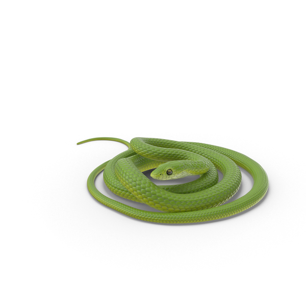 Green Snake Coiled Object